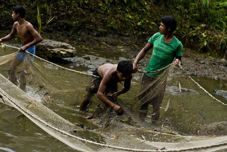 Community of Kodhaldawa fishery catching fish at West Garo Hills Image