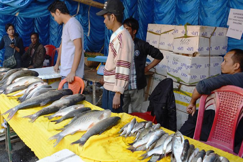 Fish on sale during Aquaculture Fest 2013 at State Central Library Shillong Image