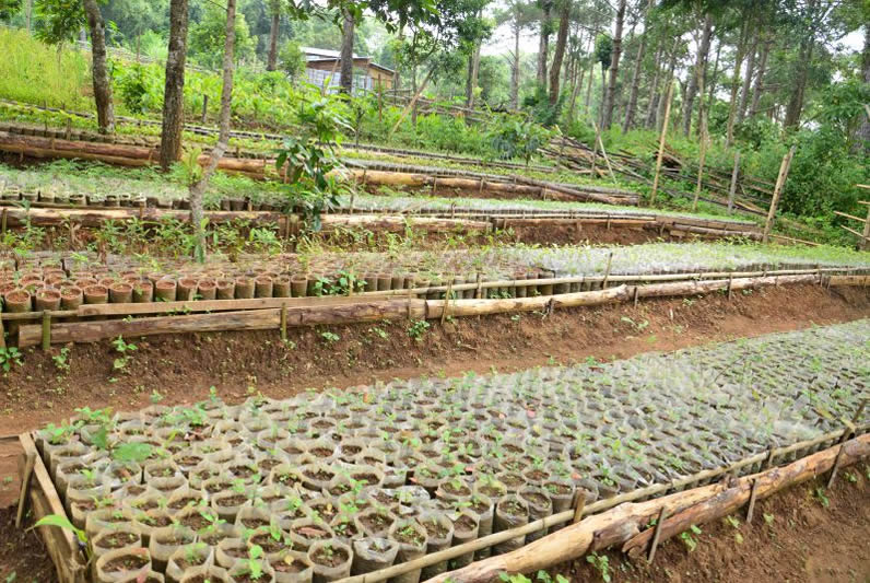 Green Mission initiative of Community Nursery at Sahsniang CLF under Laskein C&RD Block WJH Image