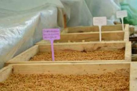 A case study of the community seed bank under the LAMJINGSHAI CLF, Ri bhoi district