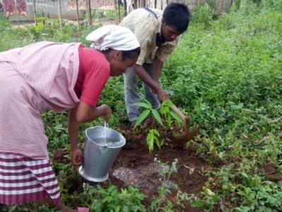 Community plantation of Kessaru & Payam trees, Ri bhoi